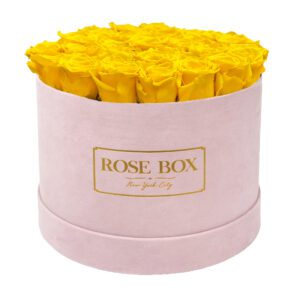large round pink bright yellow