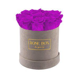 small gray royal purple