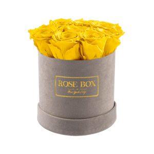 small gray bright yellow